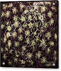 Acrylic Print featuring the photograph Raspberry Circles by Jean OKeeffe Macro Abundance Art