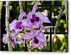 Raspberry Orchids Acrylic Print