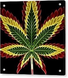 Rasta Marijuana Acrylic Print by Adam Romanowicz