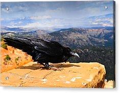 Raven Bryce Canyon Acrylic Print
