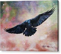 Raven In Flight Acrylic Print