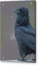 Raven In Snow- Abstract Acrylic Print by Tim Grams