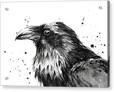 Raven Watercolor Portrait Acrylic Print by Olga Shvartsur