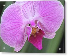 Acrylic Print featuring the photograph Ravenous Orchid by Bill Woodstock
