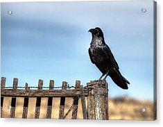 Ravenous Pride Acrylic Print