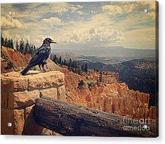 Raven's Eye View Acrylic Print by Meghan at FireBonnet Art