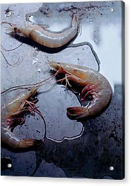 Raw Shrimp Acrylic Print