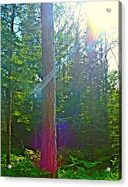 Acrylic Print featuring the photograph Ray Of Hope by Gigi Dequanne