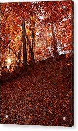Rays Of Leaves Acrylic Print