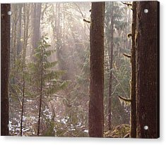 Rays Of Light In Forest Acrylic Print