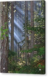 Rays Acrylic Print by Randy Hall