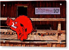 Razorback Country Acrylic Print by Benjamin Yeager
