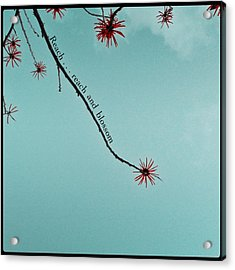Acrylic Print featuring the photograph Reach And Blossom by Kevin Bergen