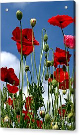 Acrylic Print featuring the photograph Reach For The Sky by Baggieoldboy