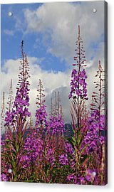 Acrylic Print featuring the photograph Reach For The Sky by Cathy Mahnke