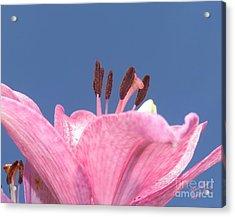 Reach For The Sky - Signed Acrylic Print