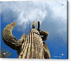 Acrylic Print featuring the photograph Reach The Sky by Dick Botkin