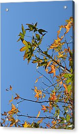 Reach Up Acrylic Print