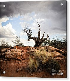 Reaching Acrylic Print