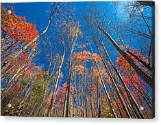 Reaching Color Acrylic Print by Scott Moore