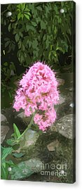 Reaching For The Light Acrylic Print by Cathy Peterson