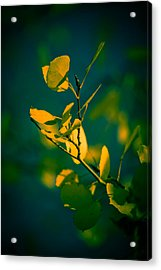 Reaching For The Light Acrylic Print by Dave Garner
