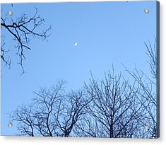 Reaching For The Moon Acrylic Print by Cim Paddock