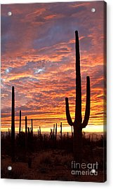 Reaching For The Sky Acrylic Print by Crush Creations
