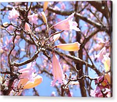 Reaching Out Acrylic Print by Van Ness