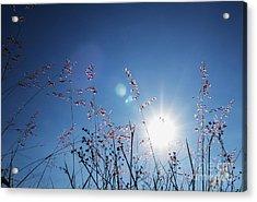 Reaching To The Sun Acrylic Print