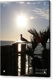 Ready For Sunset Acrylic Print by Bev Conover