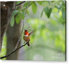 Ready For Take-off Acrylic Print by Leone Lund