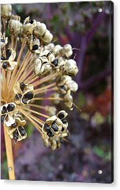 Ready To Disperse Acrylic Print by Cheryl Hoyle