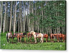 Ready To Ride Acrylic Print