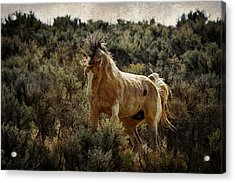 Ready To Rumble D9637 Acrylic Print by Wes and Dotty Weber