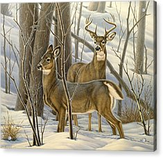 Ready - Whitetail Deer Acrylic Print by Paul Krapf