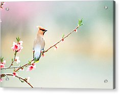 Rear View Of Bird Perching On Branch Acrylic Print by Panoramic Images