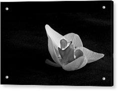 Reclining Orchid Acrylic Print