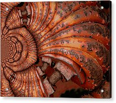 Recoiled 2 Acrylic Print by Wendy J St Christopher