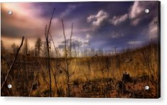 Acrylic Print featuring the photograph Recovery by Ellen Heaverlo