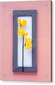 Rectangular Purple Frame With Yellow Acrylic Print by Panoramic Images