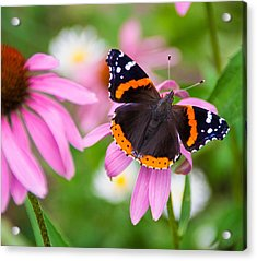 Acrylic Print featuring the photograph Red Admiral Butterfly by Patti Deters