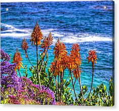 Acrylic Print featuring the photograph Red Aloe By The Pacific by Jim Carrell