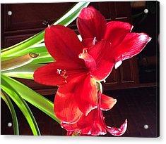Red Amarillis Acrylic Print by Nora Vega