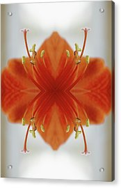 Red Amaryllis Flower Acrylic Print by Silvia Otte