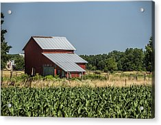 Red Amish Barn And Corn Fields Acrylic Print by Kathy Clark