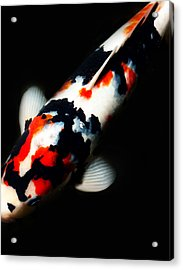 Red And Black Kois Acrylic Print