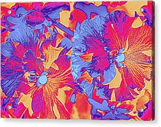 Red And Blue Pansies Pop Art Acrylic Print