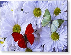 Red And Green Butterflies Acrylic Print by Garry Gay