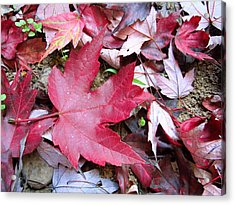 Red And Green Of Fall Acrylic Print